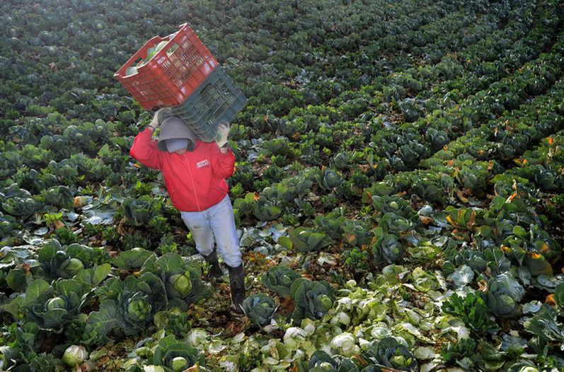 Buen Trabajo Costa Rica - Aumento de empleo